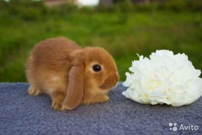 Как можно назвать крольчиху и кролика (388 кличек)